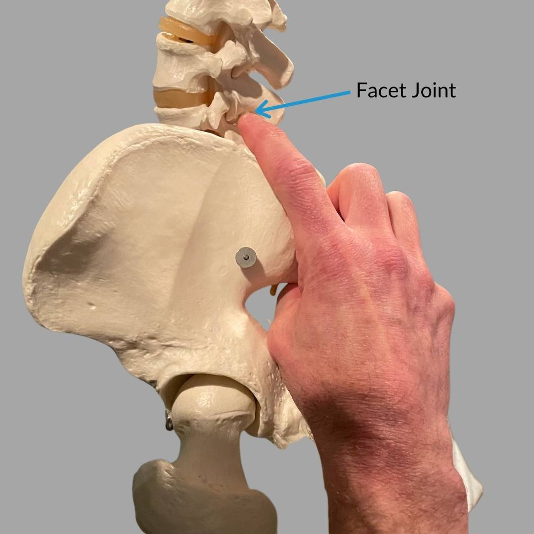 facet joint in spine